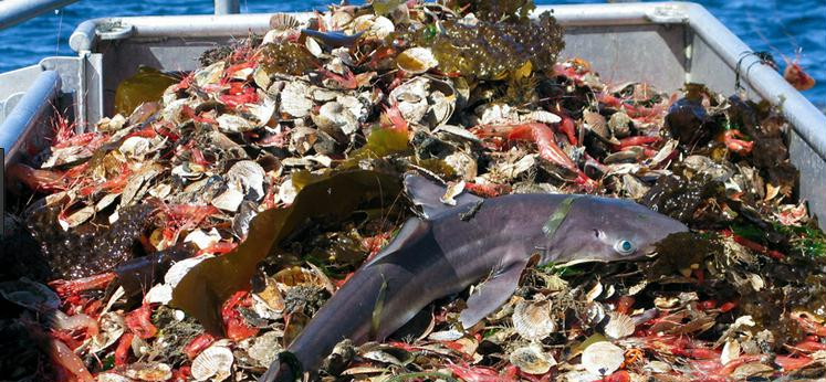 impacts of overfishing on fisheries Report: overfishing bad for fish edf's partnership with rare and the sustainable fisheries group at the university of california at santa barbara to restore.